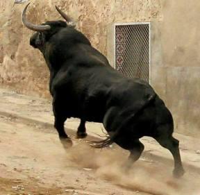 Toro Bravo los antitaurinos quieren que desaparezca
